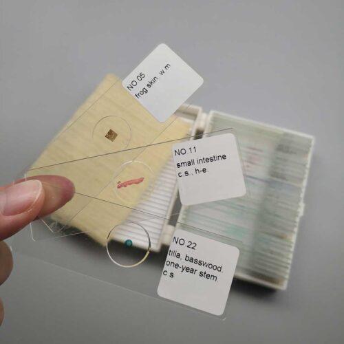 prepared-microscope-slides-30pcs-set