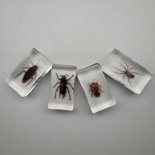 spider embedded specimen