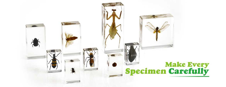 different embedded specimen