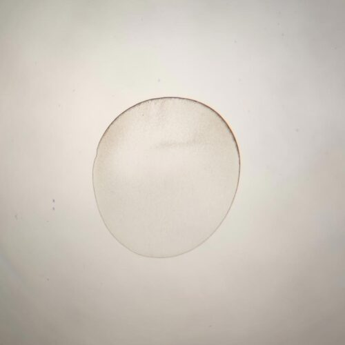 Simple-cell of egg of Frog
